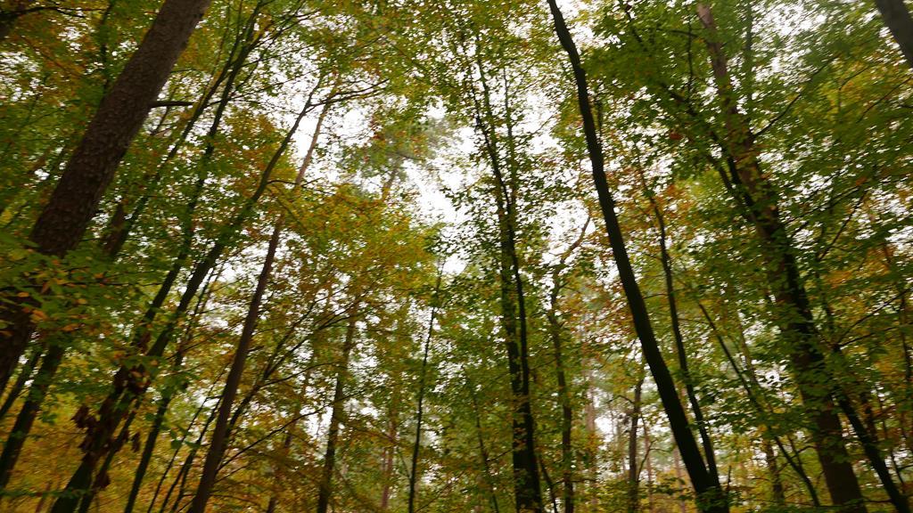 Lasy zamiast klasy